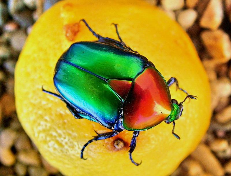 председатель большие цветные картинки жуков скрывает
